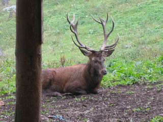 IMG_5193_stag_closeup