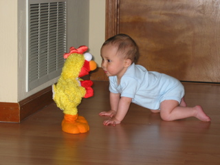 IMG_6767_tobiasXSL_elmo(chicken)